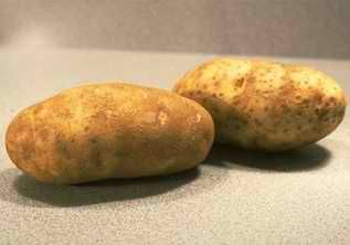 Картофель друг человека